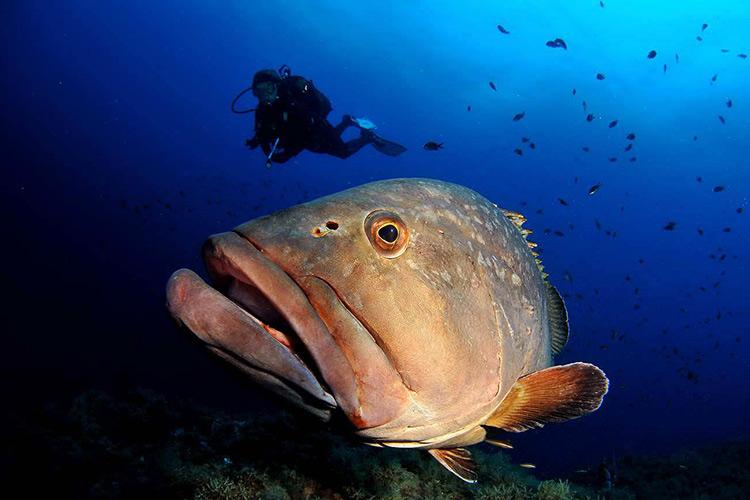 Scuba-Diving-Buzios-Brazil-3